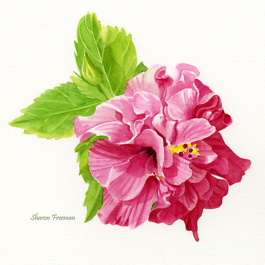 900x900 Hibiscus Rosa Sinensis Painting By Sharon Freeman