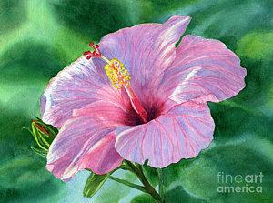 300x223 Hibiscus Watercolor Art Fine Art America