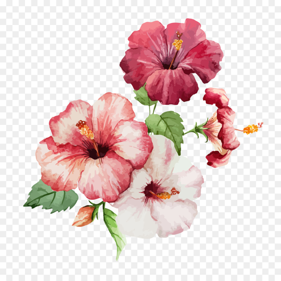 900x900 Hibiscus Flower Drawing Watercolor Painting