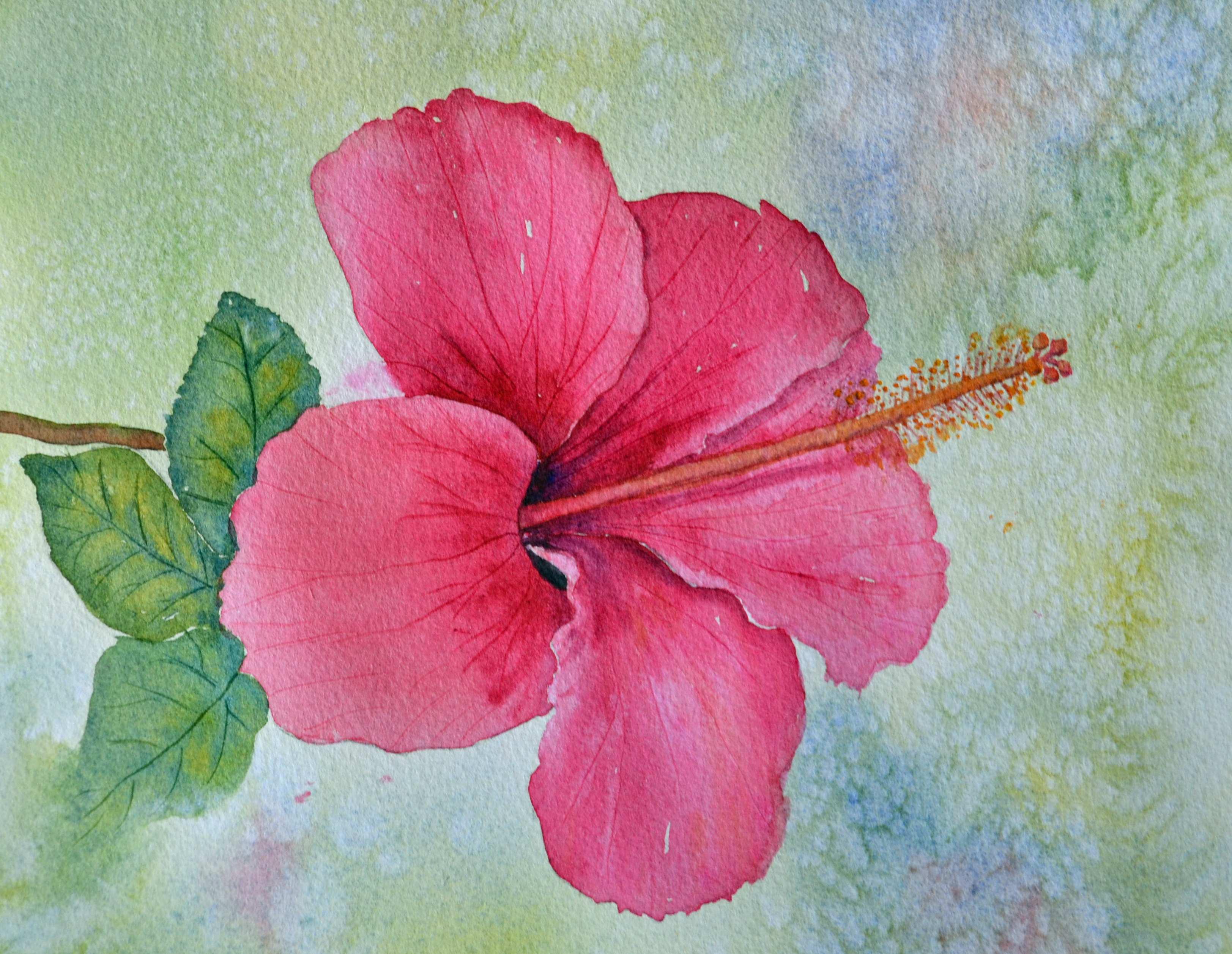 3246x2514 Hibiscus Painting Elegant Hibiscus Painting Painting Ideas