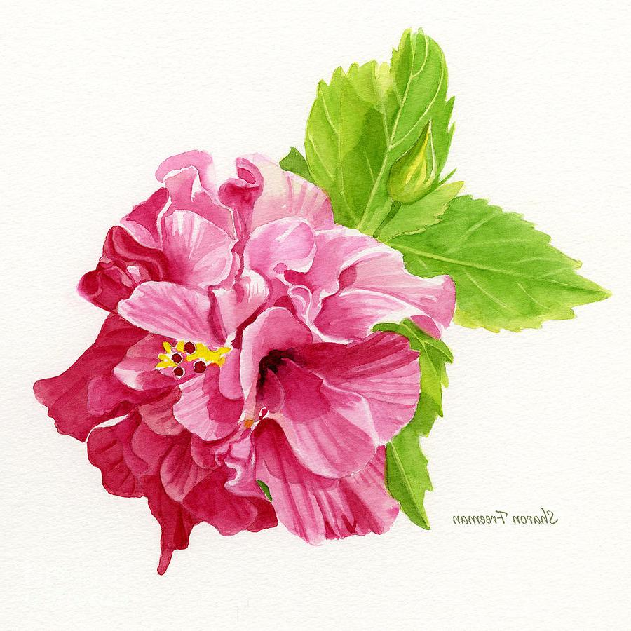 900x900 Hibiscus Watercolor Paintings Hibiscus Rosa Sinensis