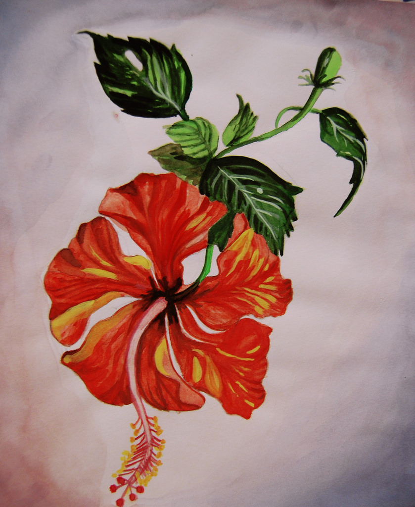 839x1024 Hibiscus Watercolor Painting I Used Water Colors To Paint