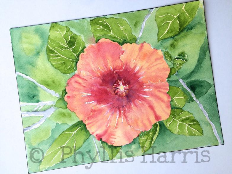 783x588 Original Hibiscus Watercolor Painting By Phyllis Harris Phyllis