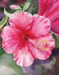 236x302 Rose Paintings And Flower Paintings In Watercolor And Oil