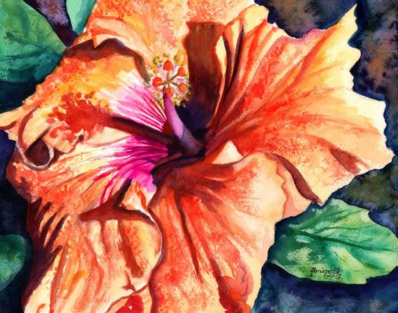 570x448 Tropical Hibiscus Watercolor Tropical Flowers Hibiscus Etsy
