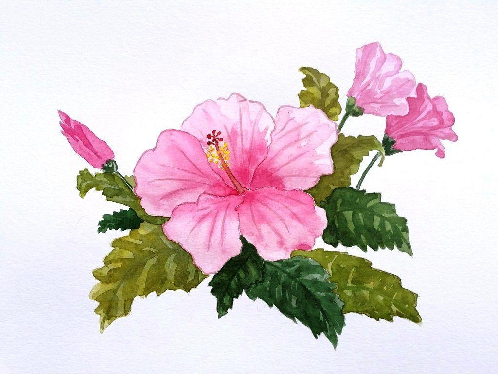 1024x768 Watercolor Painting Beautiful Pink Hibiscus Handmade Art Drawing