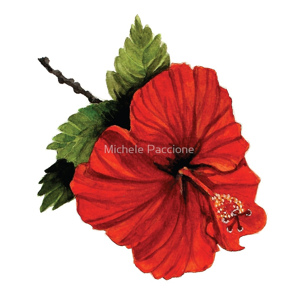 1000x1000 Watercolor Painting Of A Red Hibiscus Flower. By Michele