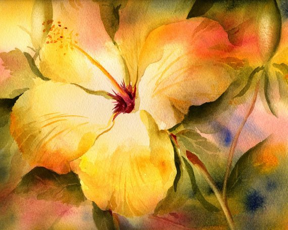 570x455 Yellow Hibiscus Watercolor Painting Print Watercolor Flower Etsy