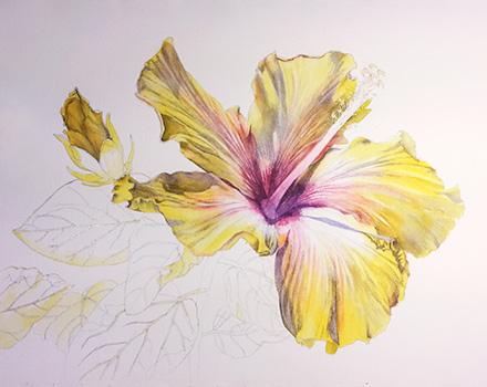 440x350 Yellow Hibiscus In Watercolor