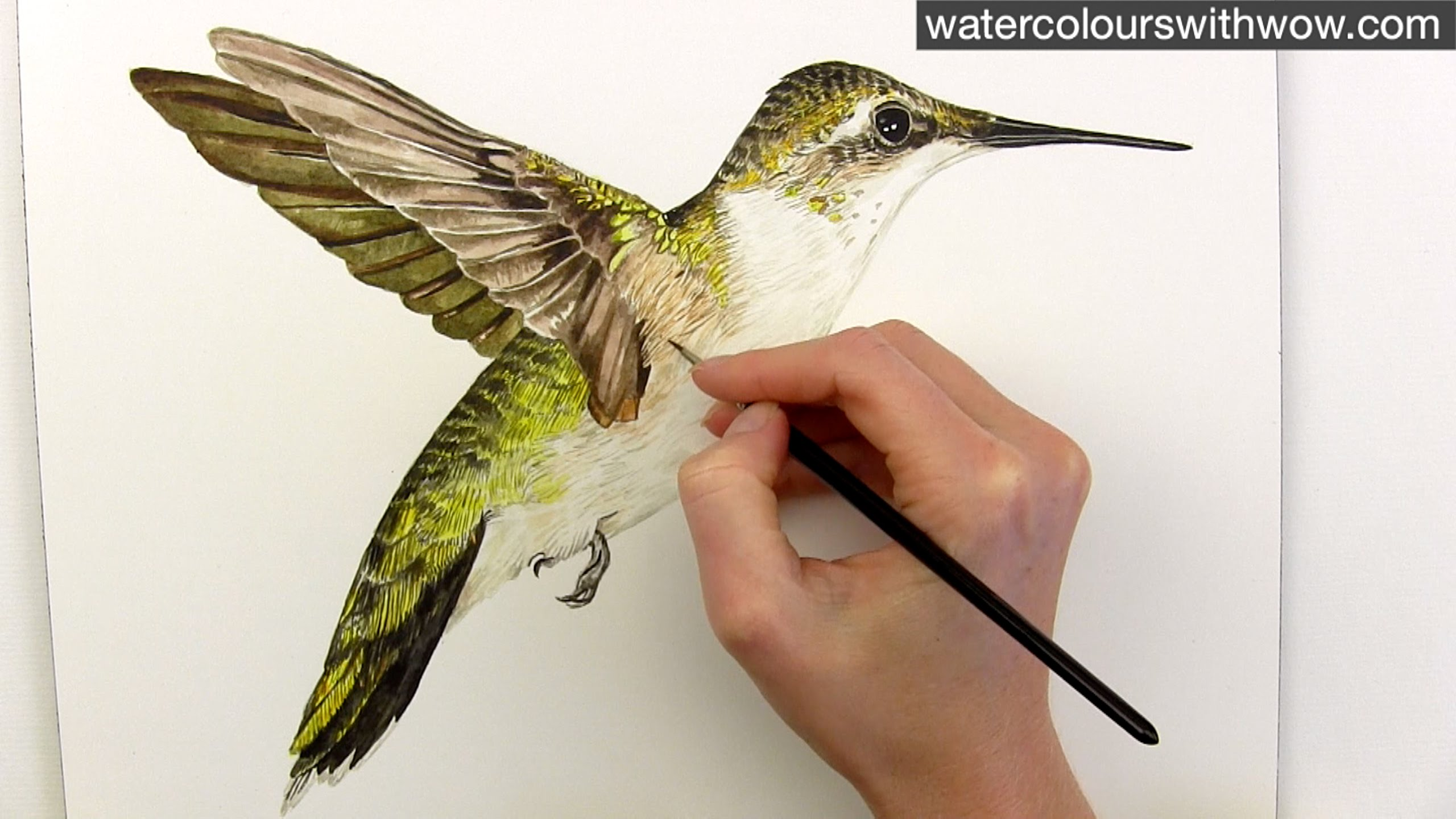 Hummingbird Watercolor Painting At Getdrawingscom Free For
