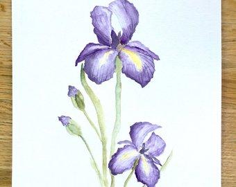 340x270 Iris Art Watercolor Painting Watercolor Iris Watercolor
