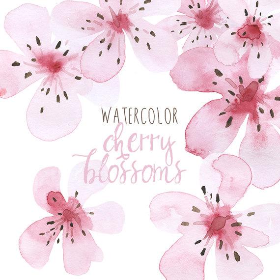 570x570 Watercolor Cherry Blossoms Clip Art, Clip Art Cherry Blossom