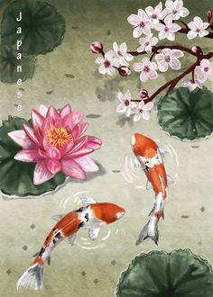 236x330 Koi Art, Koi Watercolor, Koi Painting, Cody Turtle, Japan Beauty