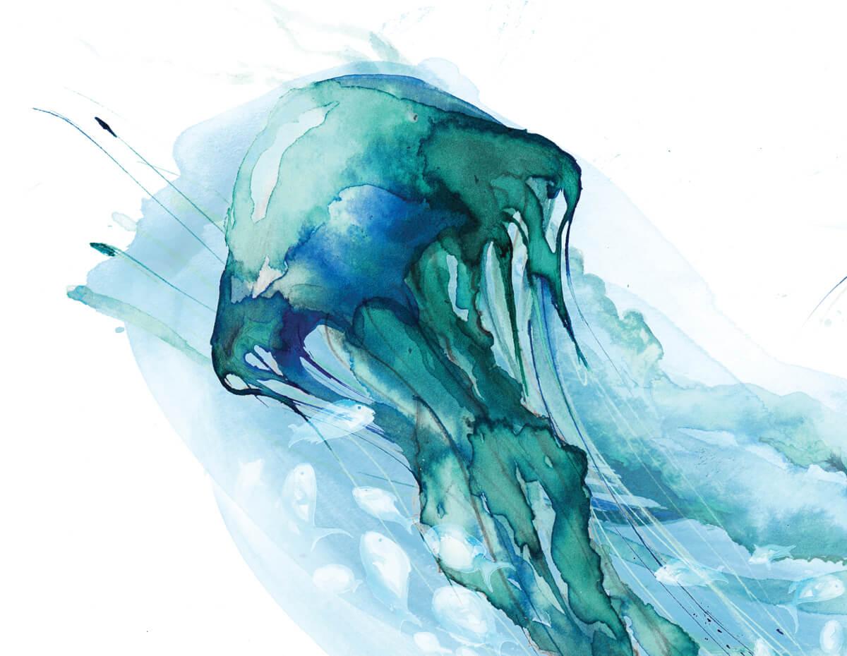 1200x930 Jellyfish Illustration Print