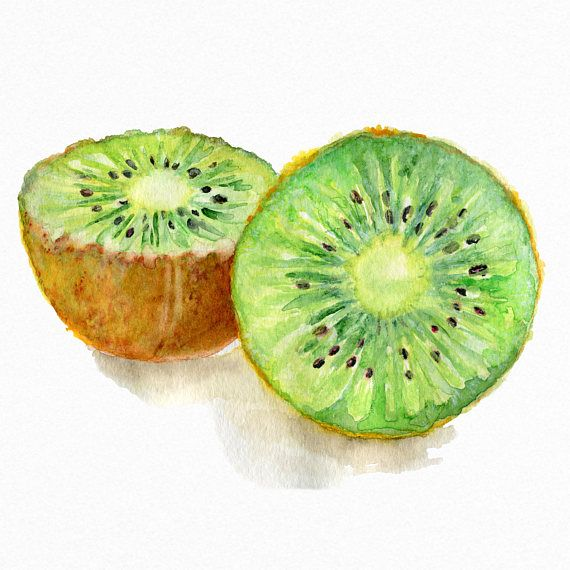 570x570 Kiwi Fruit Watercolor Art Print Food Home Decor Kitchen