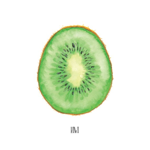 570x570 Kiwi Watercolor Painting Food Illustration Arte De Fruta Etsy
