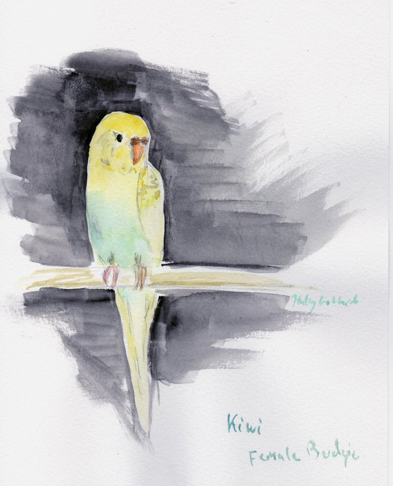 804x993 Kiwi The Budgie In Watercolor By Haleygottardo
