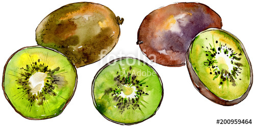 500x250 Exotic Kiwi Healthy Food In A Watercolor Style Isolated. Full Name