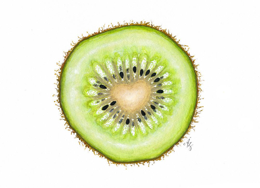 1000x725 Kiwi Art Print, Kiwi, Watercolor Kiwi, Kiwi Slice Art, Wall Decor