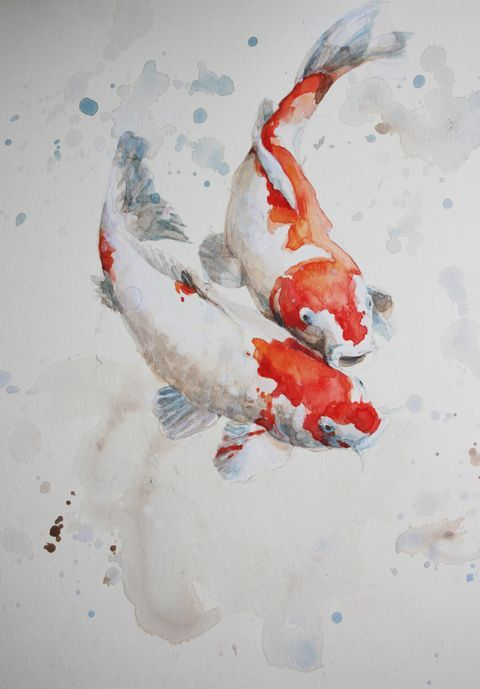 480x689 Watercolour Painting Of Fish