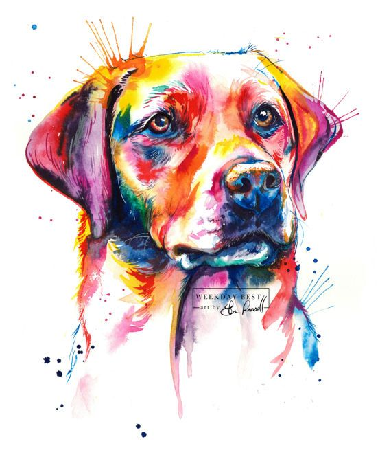 570x668 Colorful English Lab, Labrador Retriever Art Print
