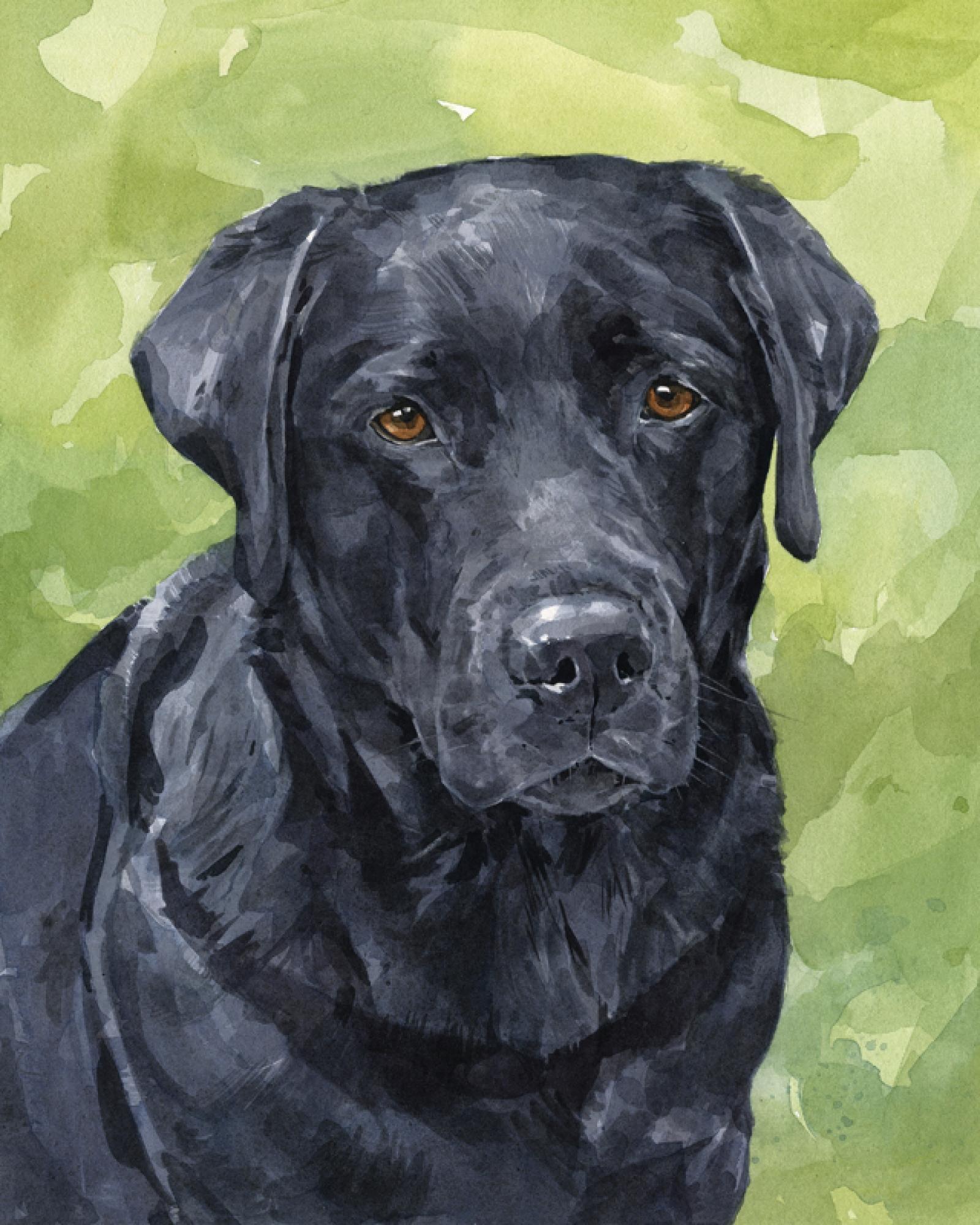 1600x2000 Custom Lab, Labrador Retriever Portrait, 8x10 Watercolor Painting