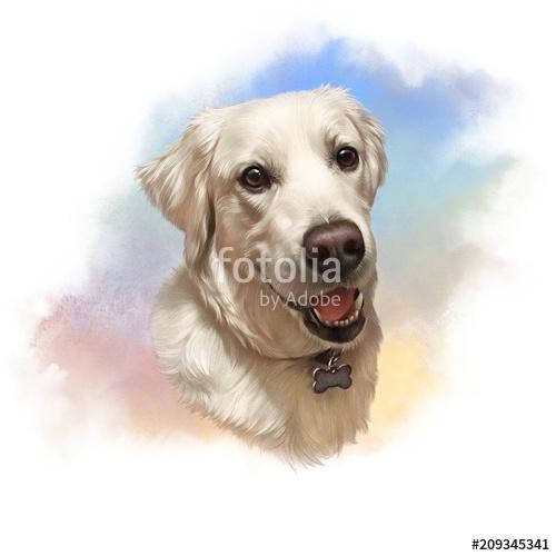 500x500 Illustration Of Labrador Retriever. Guide Dog, A Disability