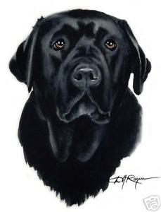 229x300 Black Lab Watercolor 8 X 10 Labrador Retriever Art Print Signed Dj
