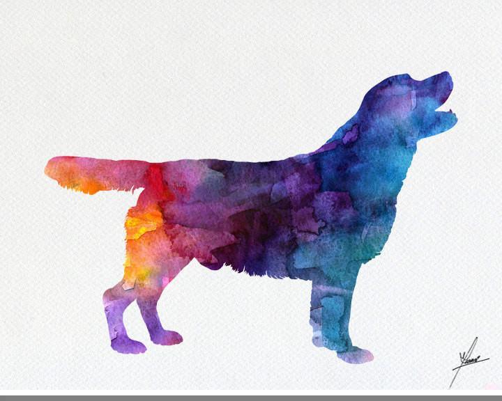 720x576 Labrador Retriever