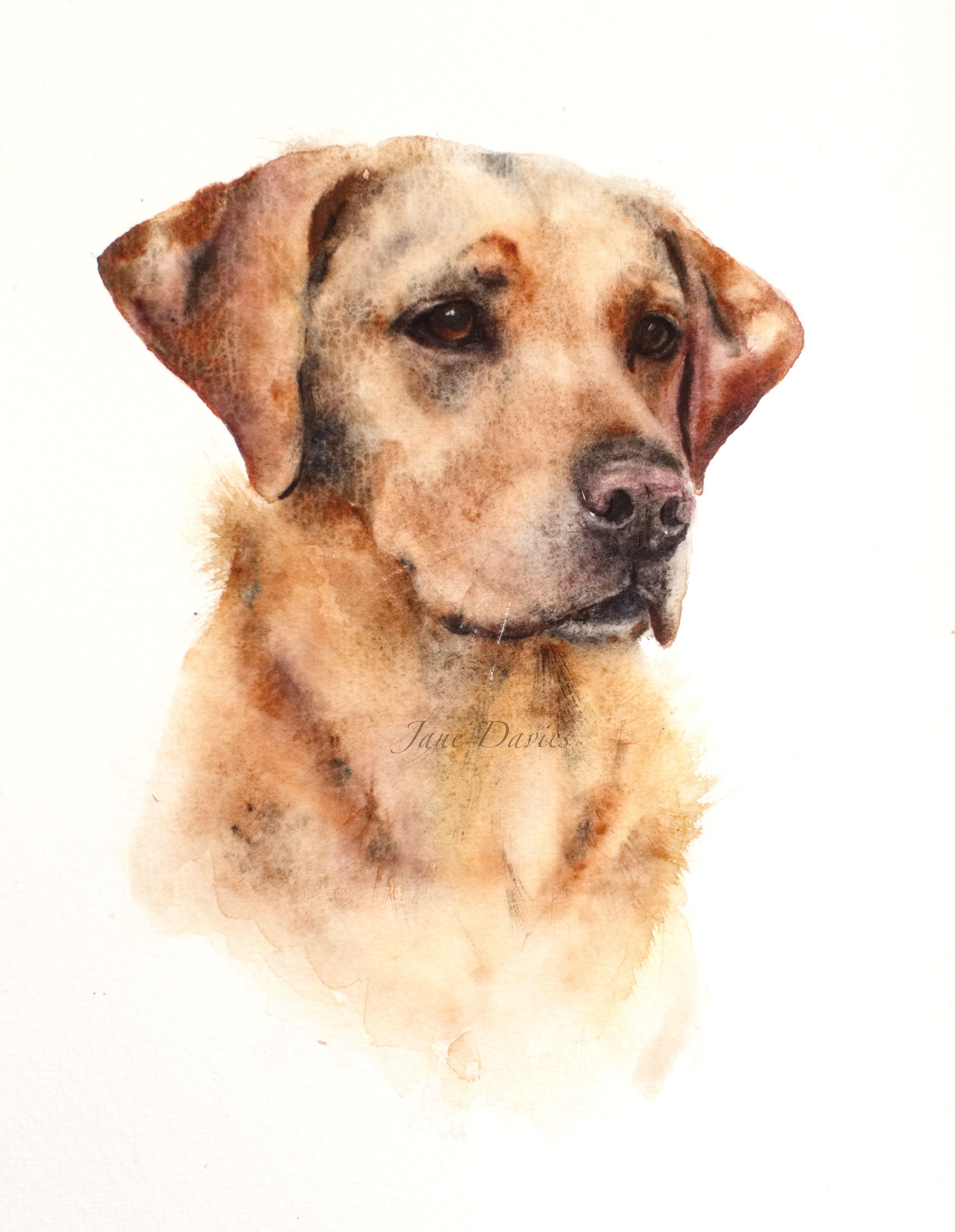 3630x4681 Pet Portrait Of A Labrador Painted By Watercolour Artist Jane
