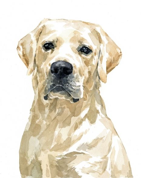 465x587 White Lab Watercolor Watercolor Techniques White