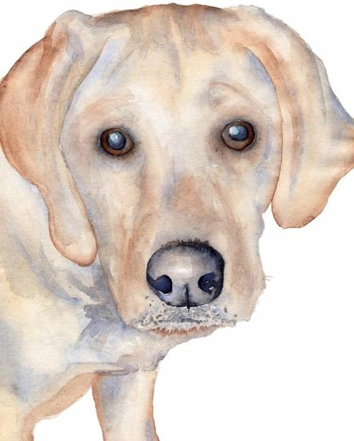 500x623 Labrador Watercolor Tumblr