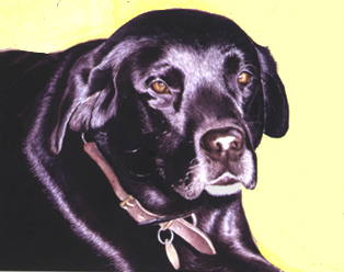 314x248 Watercolor Portraits Of My Labrador Retrievers By The Pet