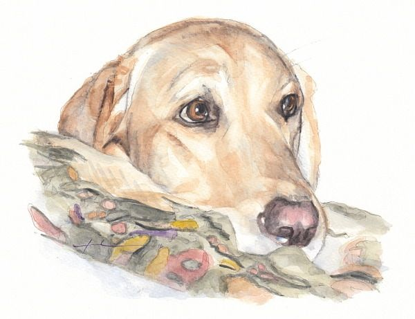 600x461 Yellow Labrador Watercolor Portrait Mike Theuer Miketheuer.tumblr