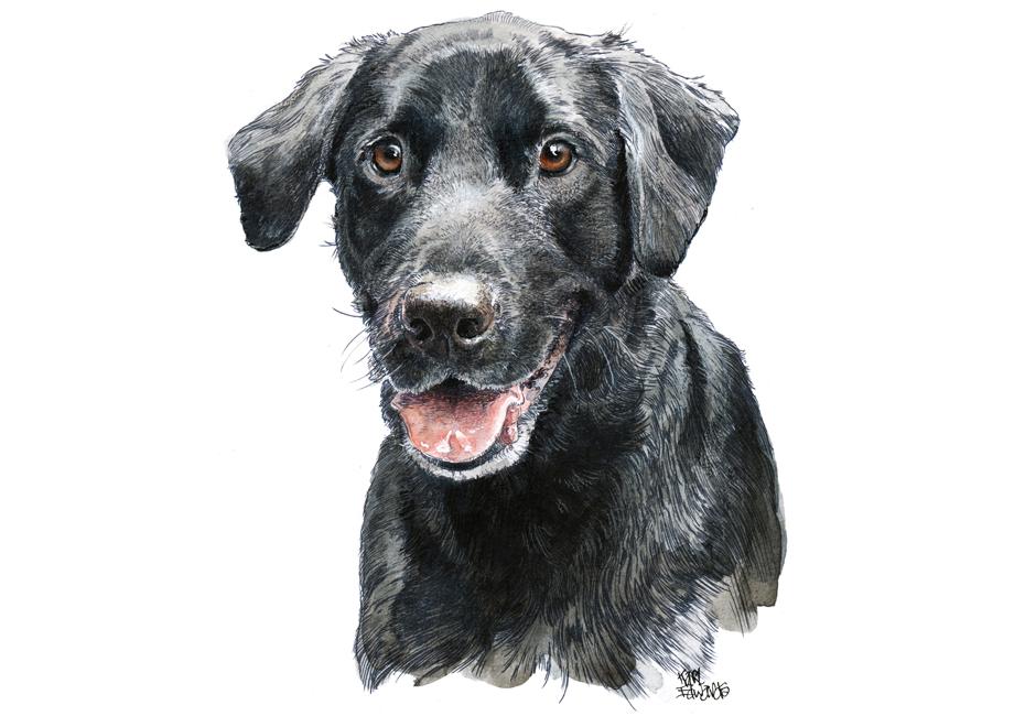 930x650 Black Labrador Retriever Karl Edwards