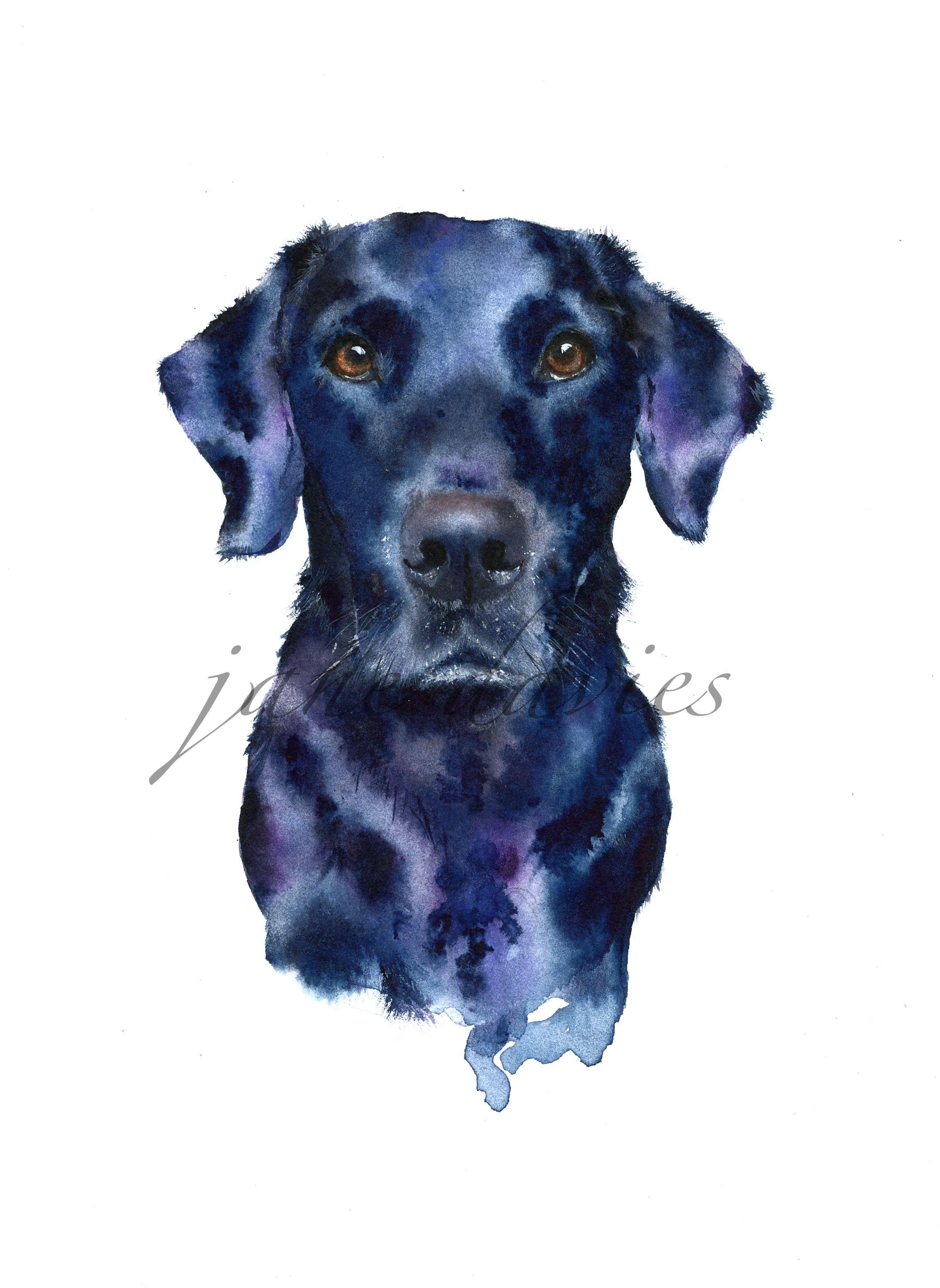 2265x3105 Black Labrador Painted By Watercolour Artist Jane Davies