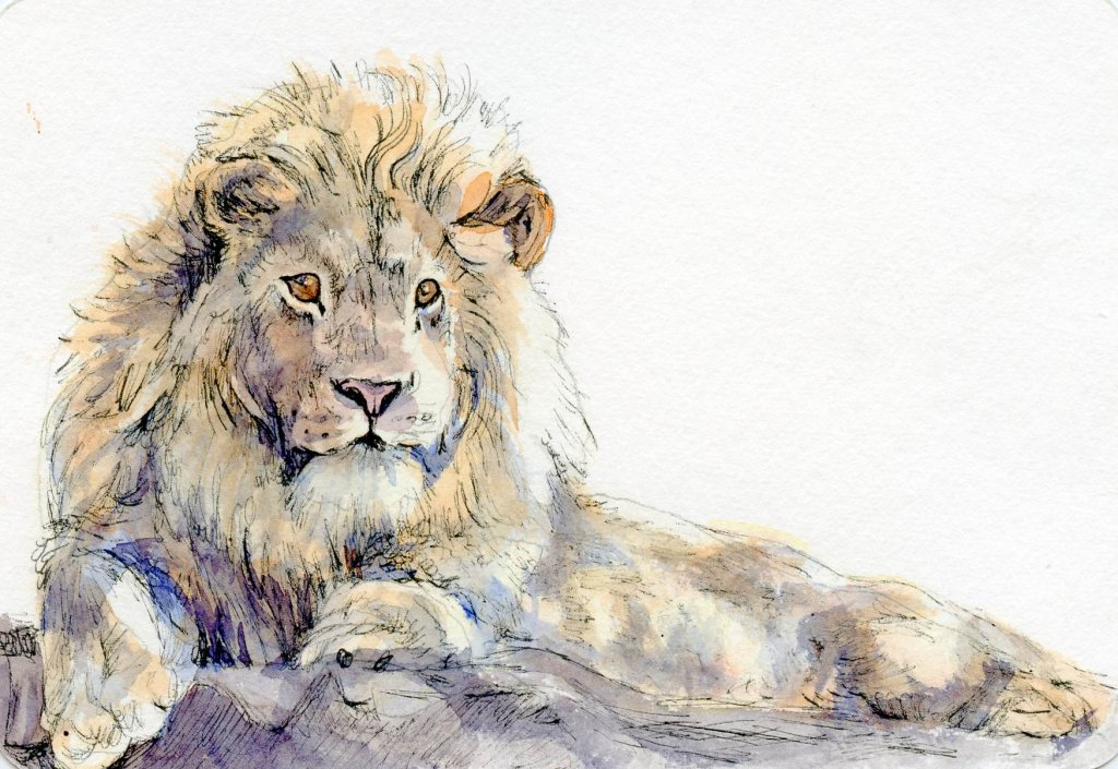 1024x705 How To Paint A Lion On A Watercolor Postcard ~ Tutorial