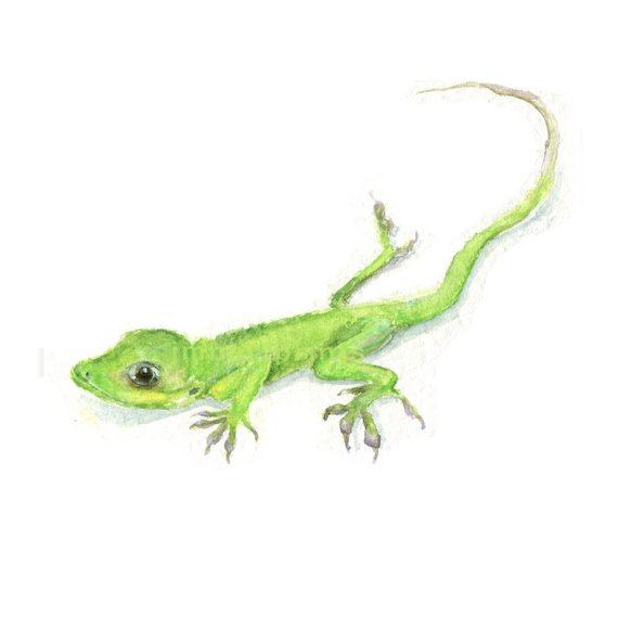 570x570 Watercolor Gecko Gecko Print Green Gecko Print Green Lizard Etsy