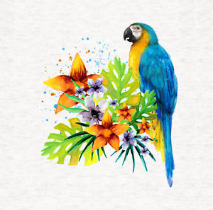 300x297 Macaw, Macaw Parrot Tropical Watercolor