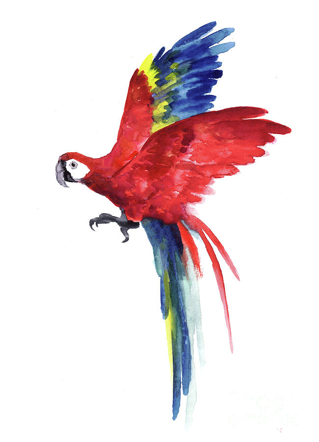 650x900 Macaw Parrot Watercolor Painting, Tropical Art Print Red Blue