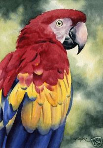 209x300 Scarlet Macaw Art Print Watercolor Painting 8 X 10 Signed By