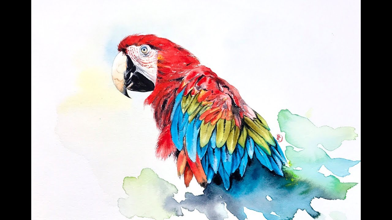 1280x720 Watercolor Macaw Painting Demonstration