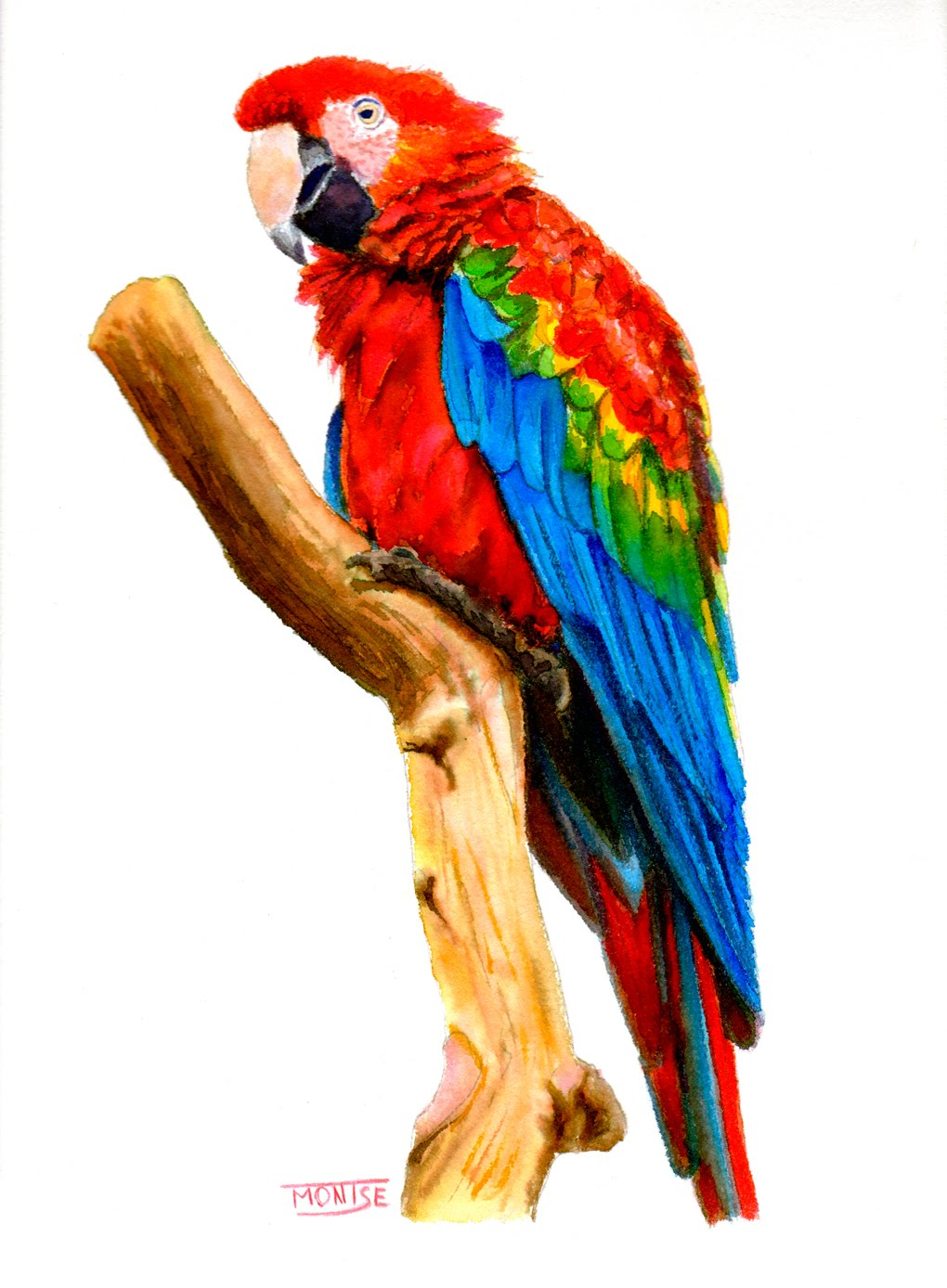 1020x1388 Guacamai Guacamayo Macaw (Step By Step Watercolor)