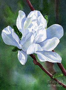 220x300 Magnolia Flower Paintings Fine Art America