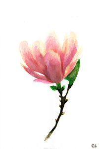 208x300 Magnolia Watercolor Paintings Fine Art America