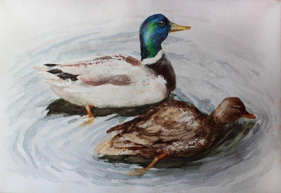 570x392 Original Watercolor Painting Mallard Duck Pair Original