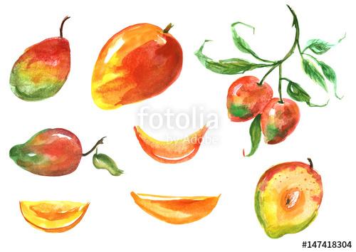500x354 Mango Watercolor Set. Tropical Fruit, Slice, Half, Branch, Bone