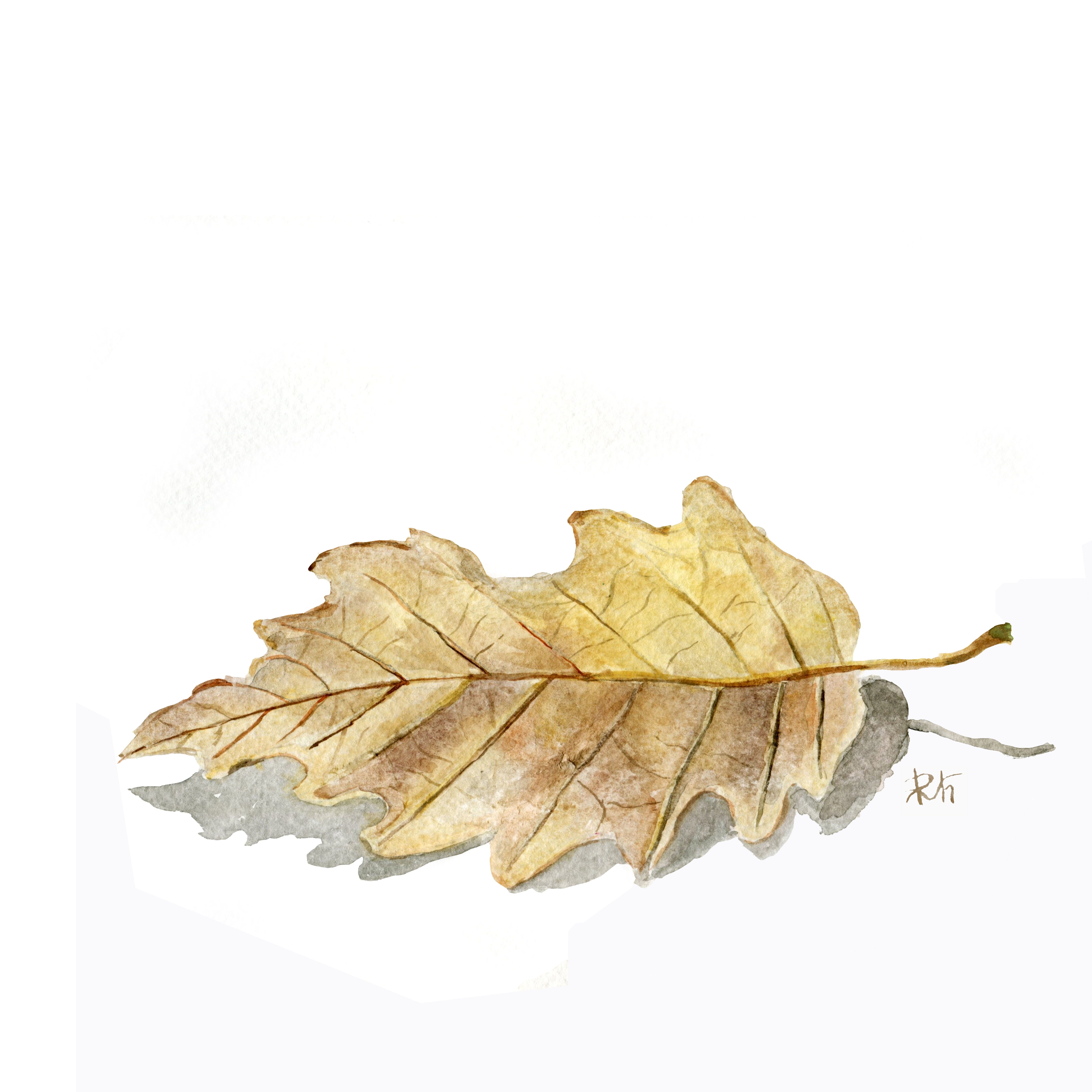 6500x6500 Free Images Tree, Nature, Forest, Branch, Produce, Maple Leaf