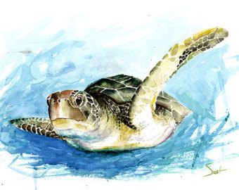 340x270 Drawn Sea Life Sea Tortoise