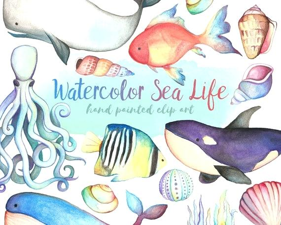 570x456 Sea Life Images Clip Art Watercolor Sea Life Watercolor Hand